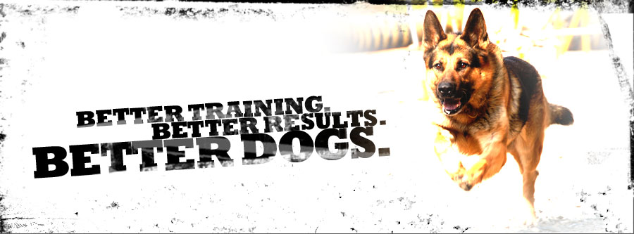 Better Training, Better Results, Better Dogs