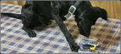 Cell Phone-Detection Dogs