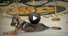 K9 Training Video