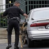 Explosive detection dog Benny sniff-searches the suspects vehicle.