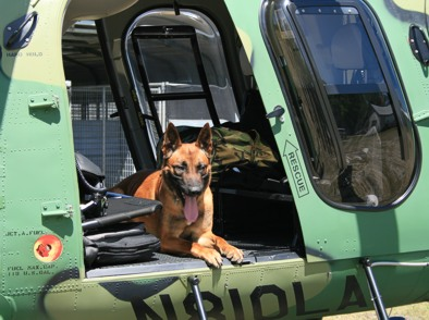 Dual purpose dogs can be trained to work in a variety of different vehicles without becoming alarmed.