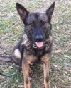 RIP brave K9 Forest